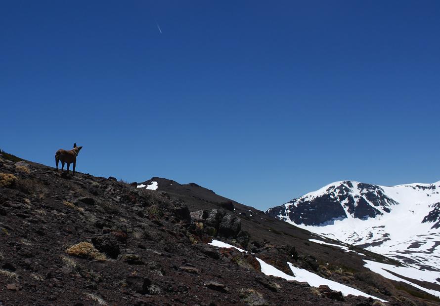 Sonora Pass climbing